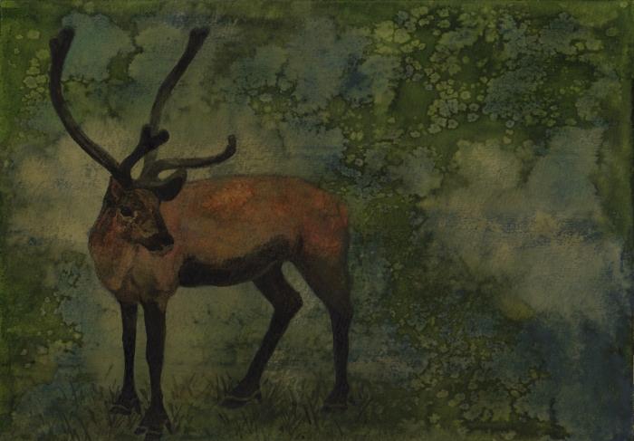 Venado, acuarela y tintas, 29,5 x 21 cm, 2014