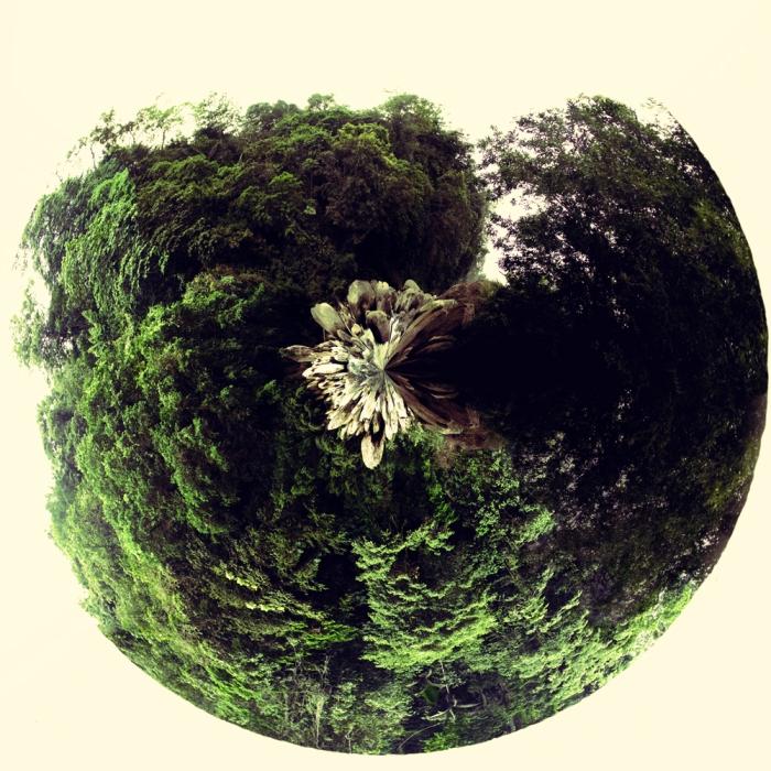 """""""Selva"""" Más que un trabajo, esta obra es una reflexión sobre la vida a partir de los caminos que recorrí en el bosque lluvioso tropical de la provincia de Esmeraldas, en donde me descubrí como una mixtura entre artista -etnógrafo-asistente de campo-turista-espía, es decir, humano. El bosque me despertó del letargo de realidad asfáltica en el que estaba sumido y simplemente me transportó en la imponencia de su clima; en la omnipresencia... del agua. https://plus.google.com/photos/116248545735826403107/albums/5668166572860016033?banner=pwa"""