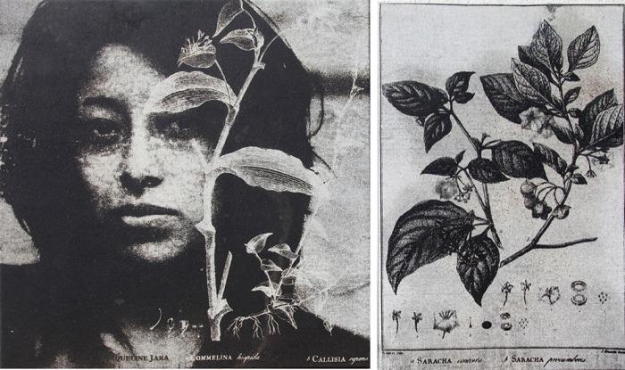 "De la serie  ""Flores de Ceniza""  ( 2012  /  pólvora  /  tela  /  políptico  /   60 x 100 cm c/u )"